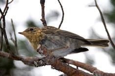 ave en árbol