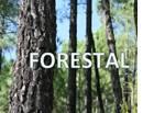 Ordenación y Gestión Forestal